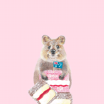 11 Seriously Cute Quokka Things