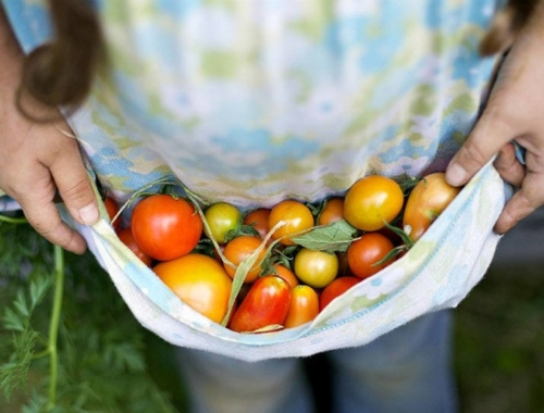 apron-of-tomatoes-large