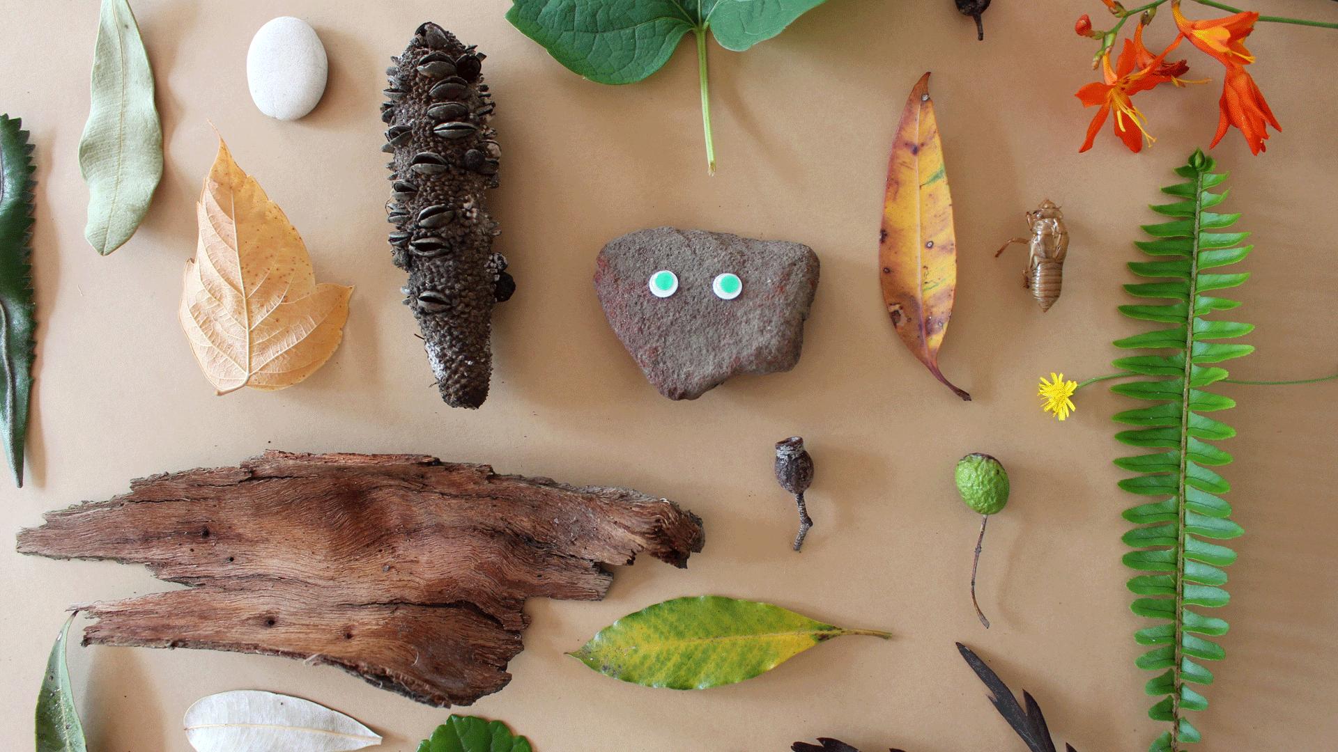 Nature Mini Mag