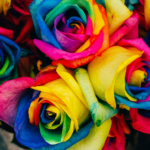 Rainbow petalled roses