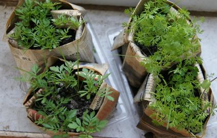 newspaper-pots-small