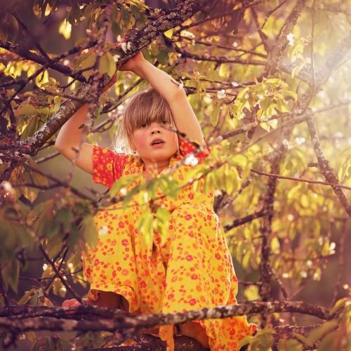 girl-climbing-tree2160
