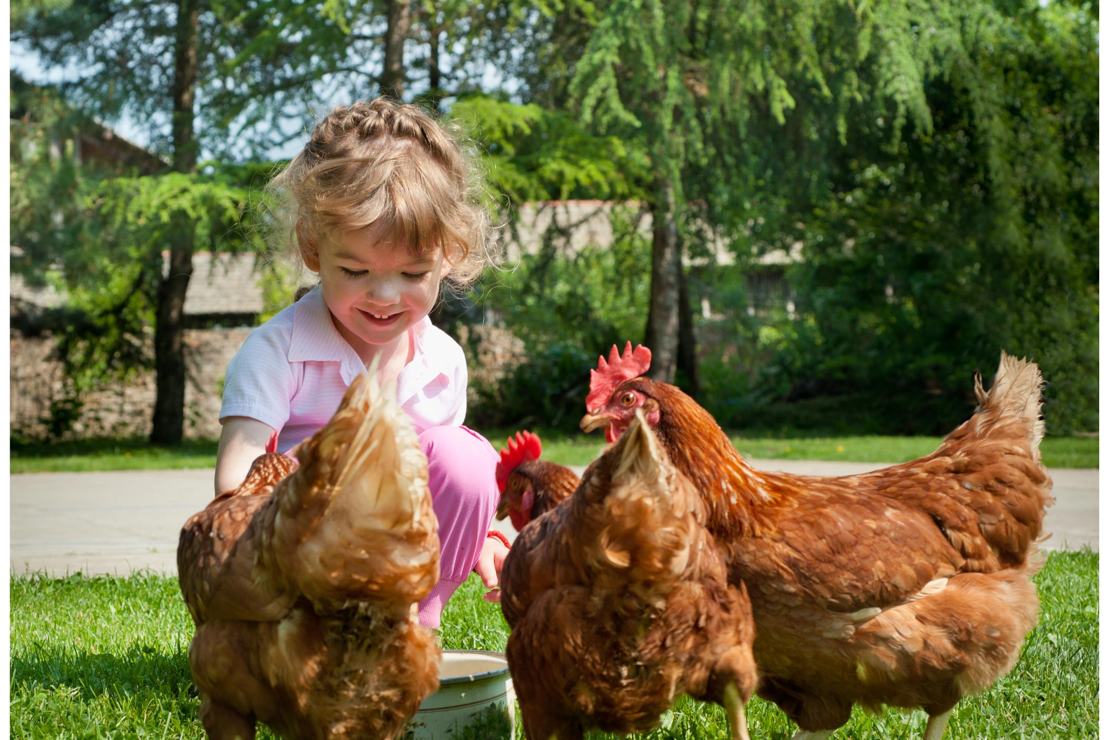 child-feeding-backyard-chickens2160
