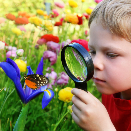 boy-magnifying-glass-garden-butterfly2160