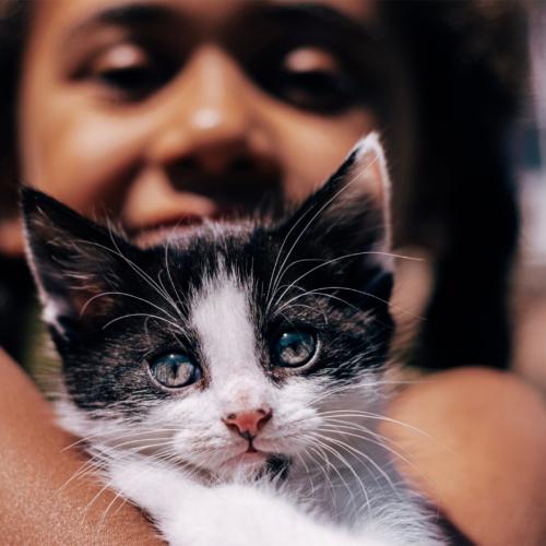 child-holding-kitten2160