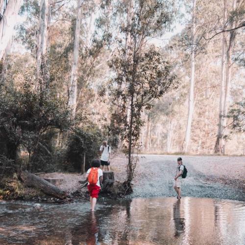 bush-walk-with-trees2160