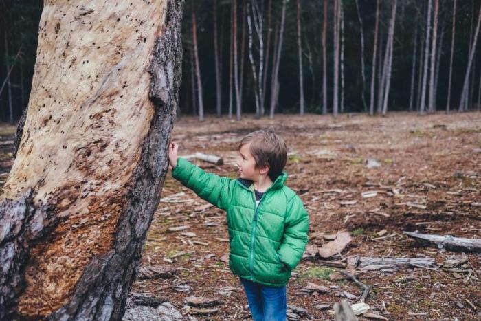 boy-outside-bush-touching-tree2160